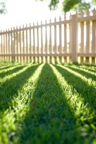 fence_yard